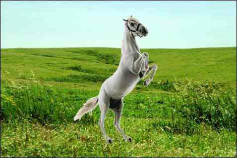Tác dụng của cao ngựa bạch với sức khỏe