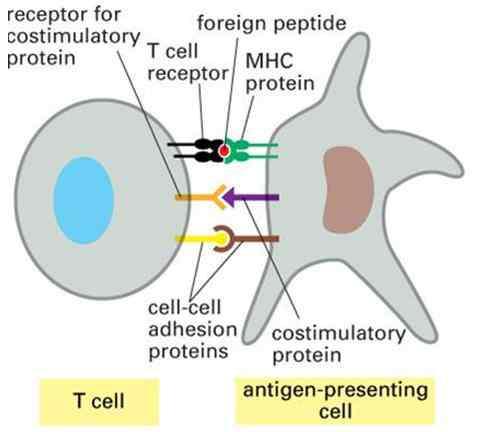 Khái niệm về đáp ứng miễn dịch