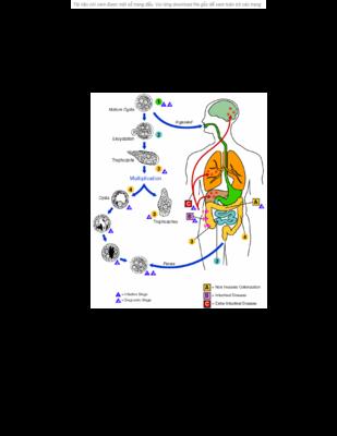 Thuốc chống amíp – trichomonas