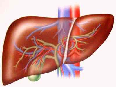 Chỉ số và ý nghĩa xét nghiệm chức năng gan