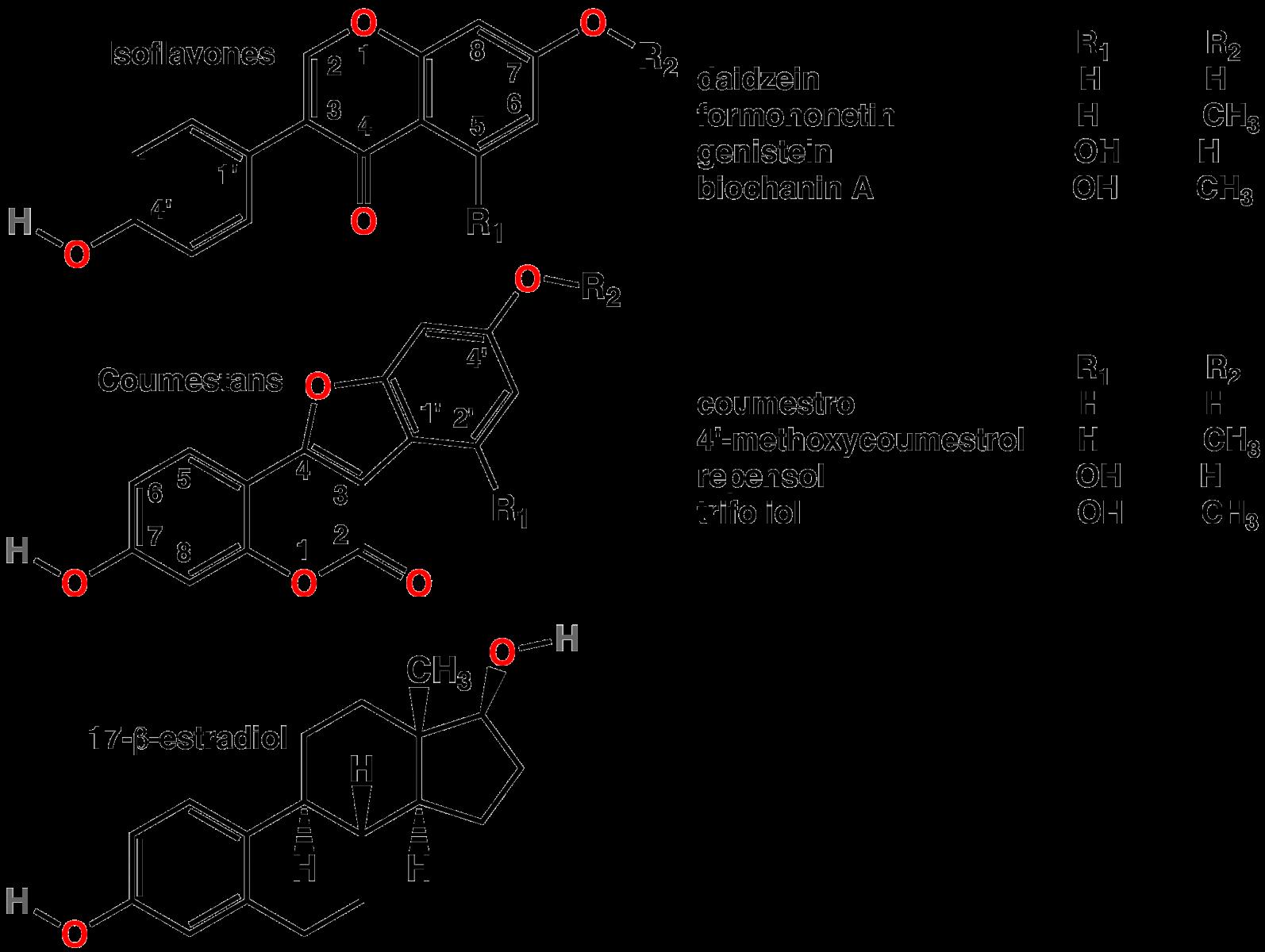 Phytoestrogen – sự thay thế của nội tiết tố nữ
