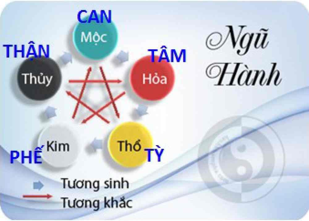 Bệnh học Tâm – Tiểu trường – Tâm bào – Tam tiêu