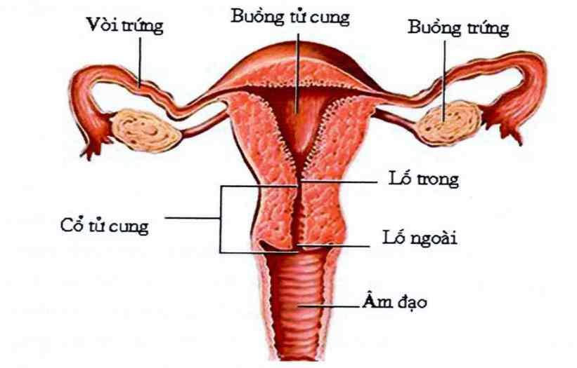 Các tổn thương cổ tử cung