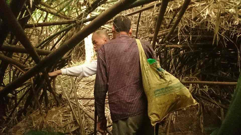 Ký sự sưu tầm cây thuốc chữa teo não ở Tuyên Quang