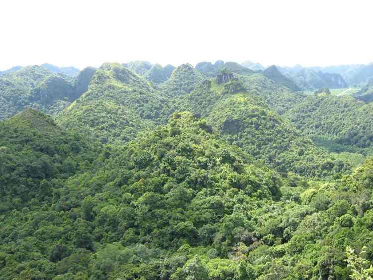 Đa dạng sinh học thực vật, cây cỏ làm thuốc ở Việt Nam và nguyên tắc phân loại