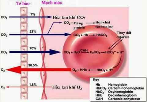 Khối lượng, thành phần, chức năng sinh lý máu