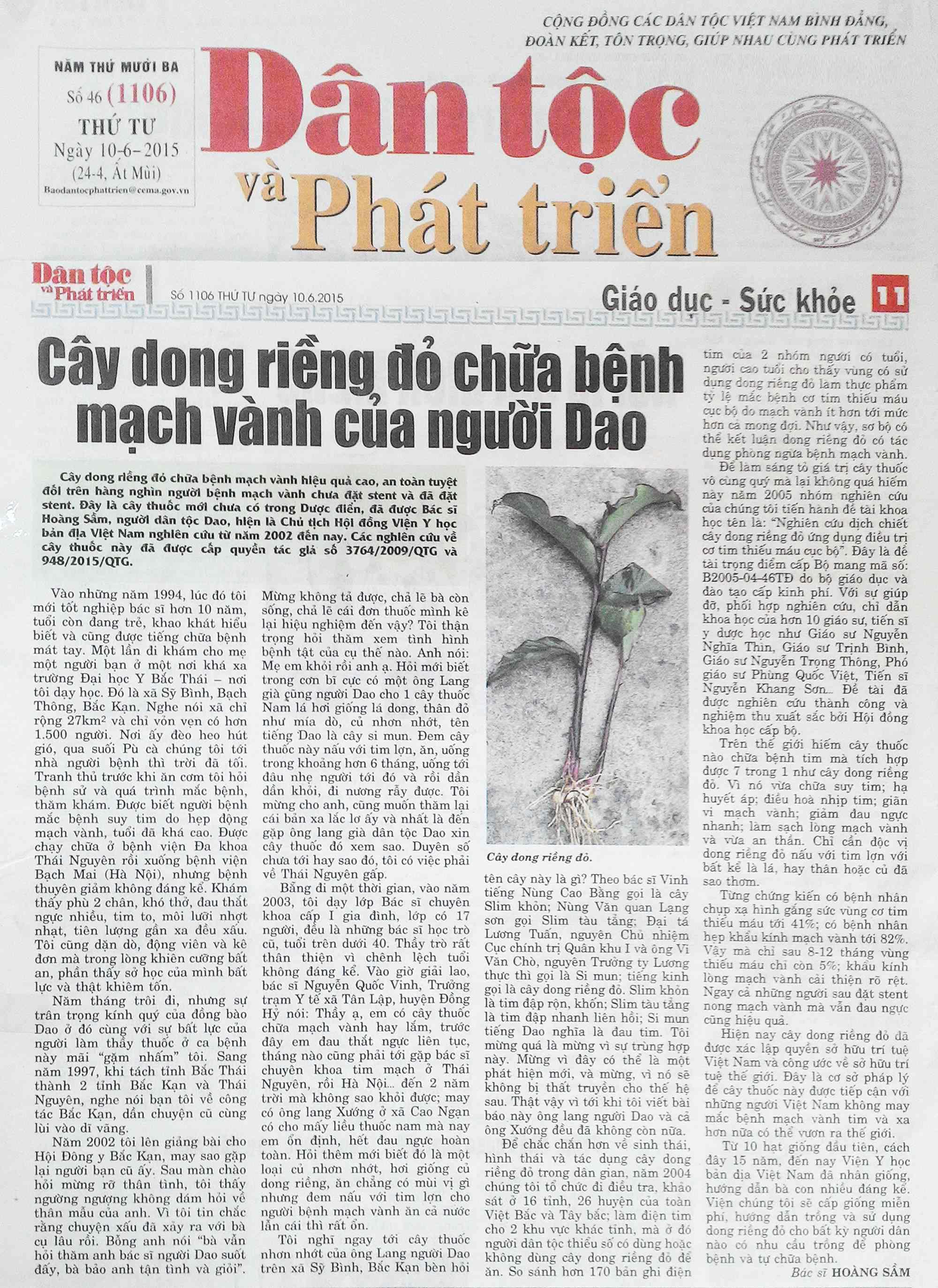 Cây dong riềng đỏ chữa bệnh mạch vành của người Dao – Báo Dân tộc và Phát triển