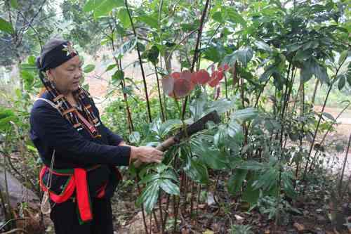 Ưu thế của Y học bản địa Việt Nam và giải pháp thúc đẩy sự phát triển